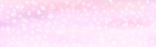 桜背景素材 ワイドのイラスト素材 [FYI03457578]