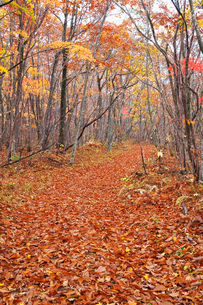 紅葉と落ち葉の道の写真素材 [FYI03457605]