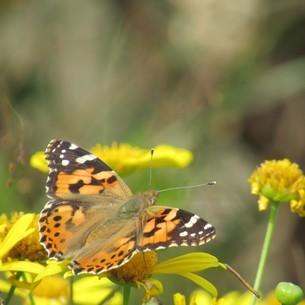 蝶々の見つめる先は花の写真素材 [FYI03457634]