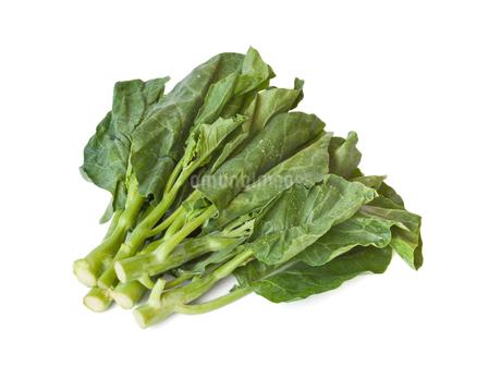 白背景のカイラン菜の写真素材 [FYI03457690]