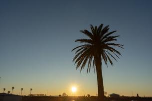 湘南の海沿いで撮影した、ヤシの木のシルエットと朝焼けのコントラストがとても綺麗でした。の写真素材 [FYI03458030]