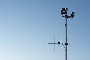 湘南の海沿いで撮影、雲一つない青空と電柱の写真素材 [FYI03458032]