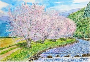 川辺の桜のイラスト素材 [FYI03458036]
