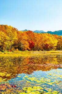 秋の志賀高原 黄葉の蓮池の写真素材 [FYI03458467]