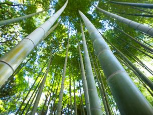 竹林の写真素材 [FYI03458609]