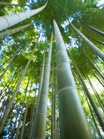 竹林の写真素材 [FYI03458610]
