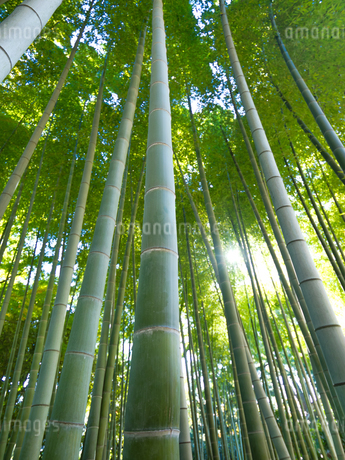 竹林の写真素材 [FYI03458611]