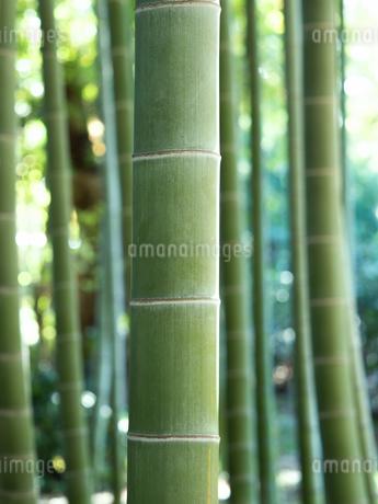 竹林の写真素材 [FYI03458617]