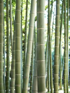 竹林の写真素材 [FYI03458620]
