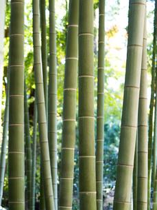 竹林の写真素材 [FYI03458621]