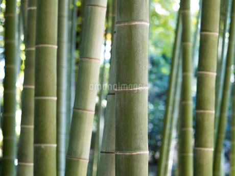 竹林の写真素材 [FYI03458623]