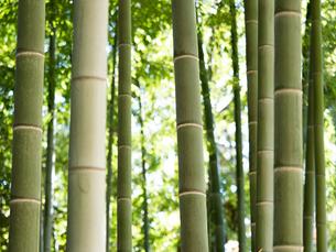竹林の写真素材 [FYI03458624]
