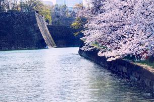 大阪城公園の桜と外堀の写真素材 [FYI03458692]