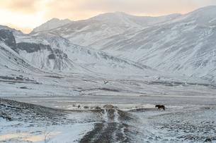 牧草地と雪山の写真素材 [FYI03458929]
