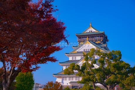 紅葉と大阪城 - 日本の風景の写真素材 [FYI03459007]