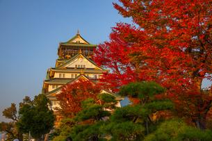 紅葉と大阪城 - 日本の風景の写真素材 [FYI03459009]