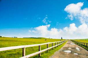 夏の美ヶ原高原 の写真素材 [FYI03459132]