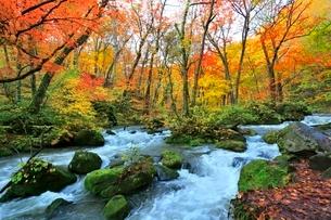 奥入瀬渓流 阿修羅の流れの紅葉の写真素材 [FYI03459309]