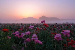 筑波山の夜明けの写真素材 [FYI03459570]