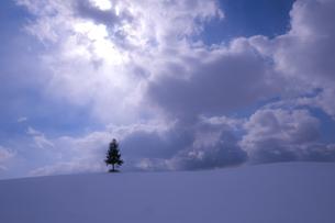 美瑛の雪の丘の写真素材 [FYI03459574]