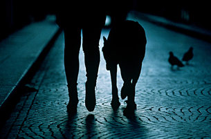 A person walking their dogの写真素材 [FYI03461225]