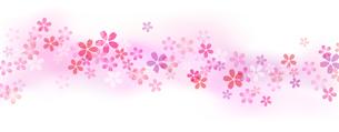 桜の流れとグラデーション背景のイラスト素材 [FYI03462323]