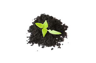 Seedling in soilの写真素材 [FYI03462602]