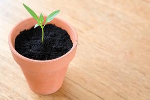 Seedling in a potの写真素材 [FYI03462603]
