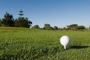 A golf ball on a teeの写真素材 [FYI03463713]