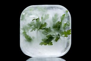 Frozen parsleyの写真素材 [FYI03464207]