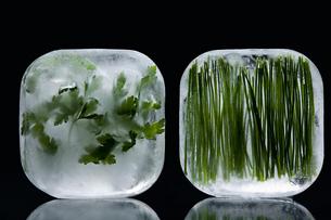 Frozen herbsの写真素材 [FYI03464213]