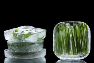 Frozen herbsの写真素材 [FYI03464216]