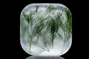 Frozen dillの写真素材 [FYI03464219]