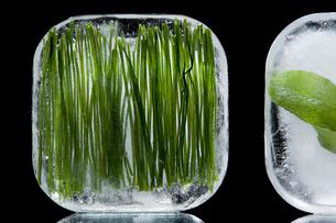 Frozen herbsの写真素材 [FYI03464230]