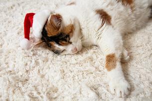 Cute christmas catの写真素材 [FYI03465421]