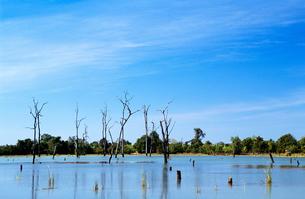 Flooded areaの写真素材 [FYI03465731]