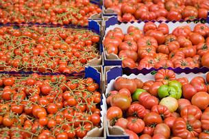Tomatoes in catania marketの写真素材 [FYI03467612]