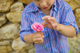 A boy picking petals off a flowerの写真素材 [FYI03467978]