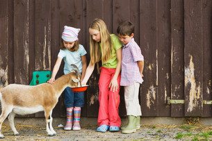 Children feeding goatsの写真素材 [FYI03468041]