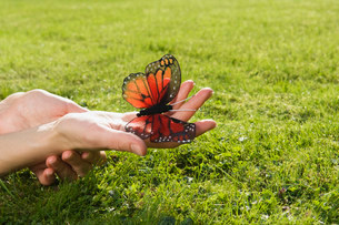 Person holding butterflyの写真素材 [FYI03468943]