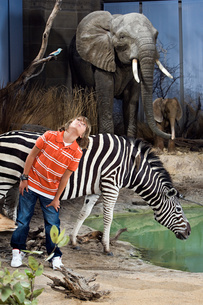 Boy standing by animals in a museumの写真素材 [FYI03469324]
