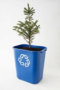 A tree in a recycling binの写真素材 [FYI03469967]