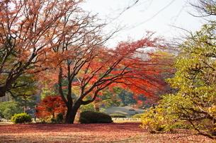 東京都 豊島区 六義園の紅葉風景の写真素材 [FYI03470137]
