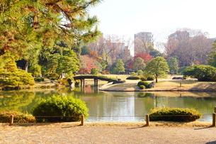 東京都 豊島区 六義園の紅葉風景の写真素材 [FYI03470244]