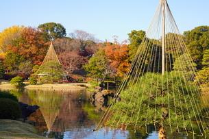 東京都 豊島区 六義園の紅葉風景の写真素材 [FYI03470278]