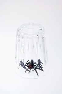 A toy spider trapped under a glassの写真素材 [FYI03470297]