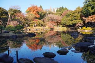 東京都北区の旧古河庭園の紅葉の写真素材 [FYI03470393]