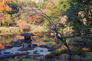 東京都北区の旧古河庭園の紅葉の写真素材 [FYI03470429]