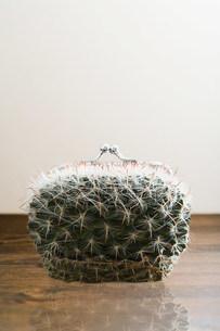 Cactus purseの写真素材 [FYI03470903]