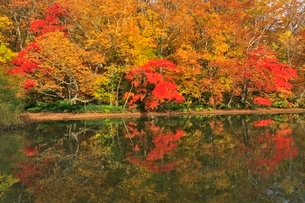 十和田湖の紅葉の写真素材 [FYI03472497]